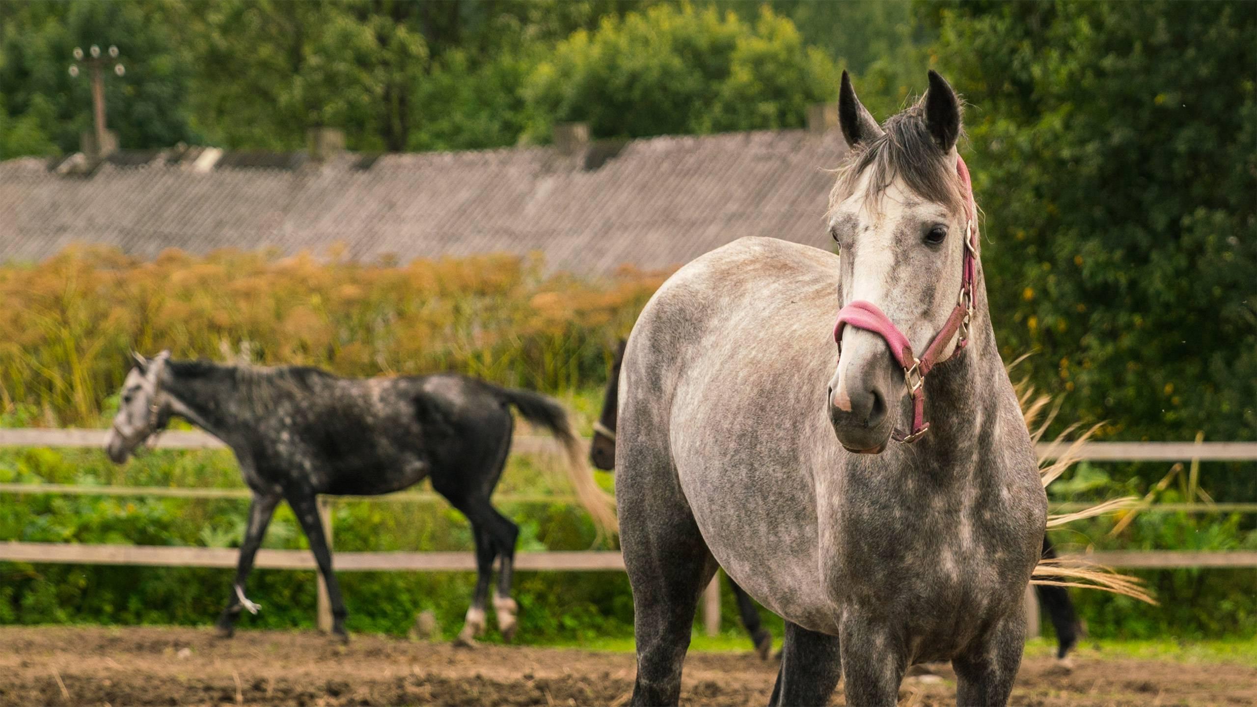 Hotel-Colonna-Frascati-cavalli