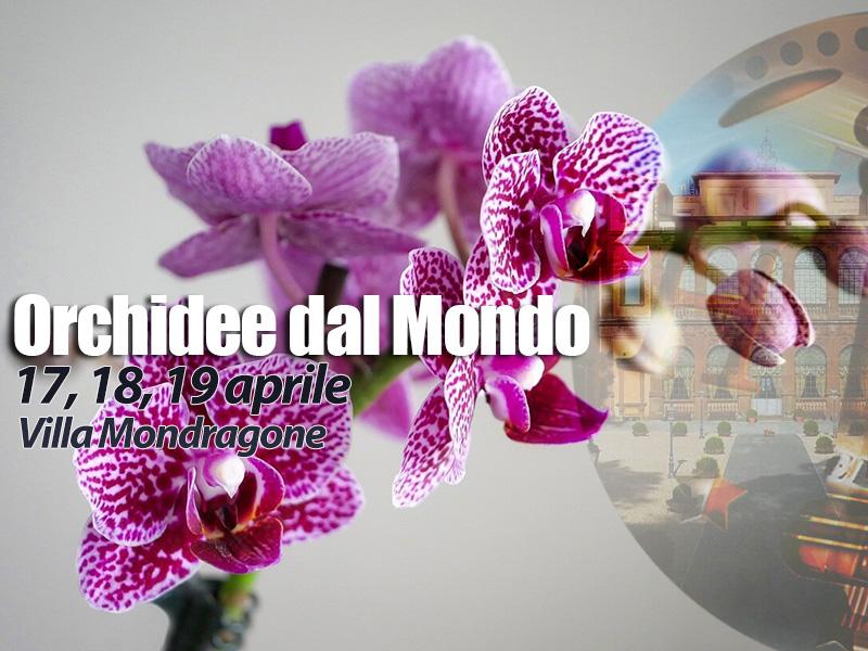 orchidee-dal-mondo-villa-mondragone-orchid-fair